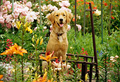 DOG 03 RK0374 20