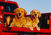 DOG 03 RK0381 08
