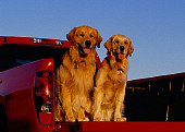 DOG 03 RK0382 01