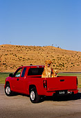 DOG 03 RK0386 12