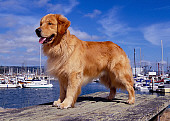DOG 03 RK0387 08