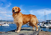 DOG 03 RK0387 22