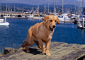 DOG 03 RK0392 06