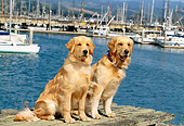DOG 03 RK0393 06
