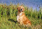 DOG 03 RK0399 01