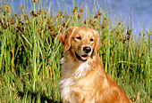 DOG 03 RK0399 07