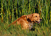 DOG 03 RK0400 01