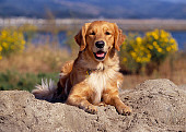 DOG 03 RK0401 03