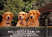 DOG 03 RK0402 06
