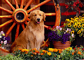 DOG 03 RK0411 10
