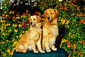 DOG 03 RK0415 04