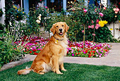 DOG 03 RK0418 16