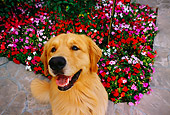 DOG 03 RK0422 03