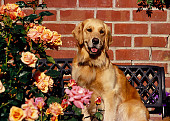 DOG 03 RK0427 03