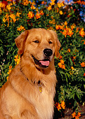 DOG 03 RK0432 03