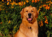 DOG 03 RK0432 04