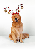 DOG 03 RK0451 06