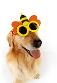 DOG 03 RK0463 01