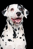 DOG 04 AC0002 01