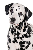 DOG 04 AC0006 01