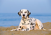 DOG 04 CB0001 01