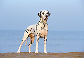 DOG 04 CB0004 01