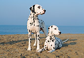 DOG 04 CB0006 01