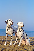 DOG 04 CB0007 01