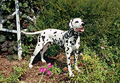 DOG 04 FA0008 01