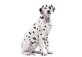 DOG 04 JE0001 01