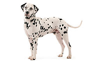DOG 04 JE0002 01