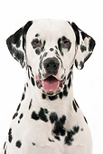 DOG 04 JE0003 01