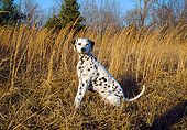 DOG 04 JN0001 01