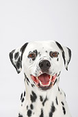DOG 04 PE0001 01