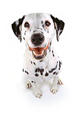 DOG 04 RK0019 08
