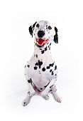 DOG 04 RK0020 03