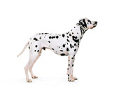 DOG 04 RK0099 01
