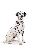 DOG 04 RK0102 01