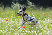 DOG 04 SS0006 01