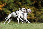 DOG 04 SS0007 01