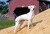 DOG 04 CE0001 01