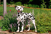 DOG 04 CE0004 01