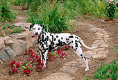 DOG 04 CE0005 01