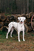 DOG 04 CE0007 01