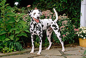 DOG 04 CE0008 01