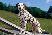 DOG 04 CE0011 01