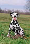 DOG 04 CE0013 01