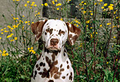 DOG 04 CE0014 01