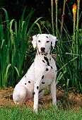 DOG 04 CE0015 01