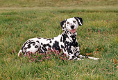 DOG 04 CE0017 01